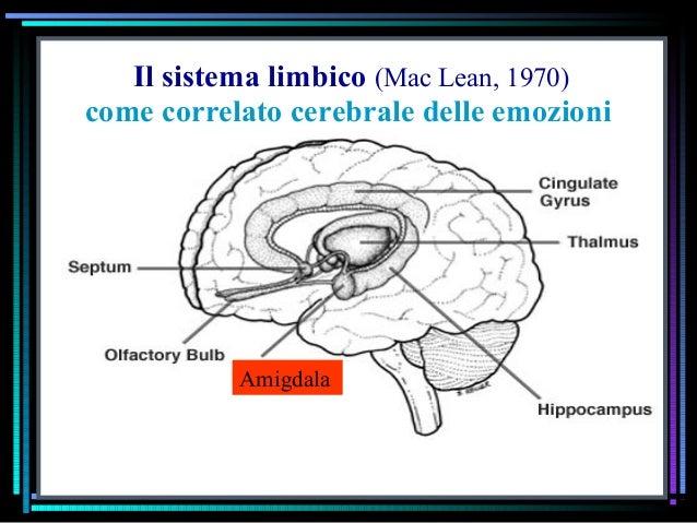 Il sistema limbico (Mac Lean, 1970) Amigdala come correlato cerebrale delle emozioni