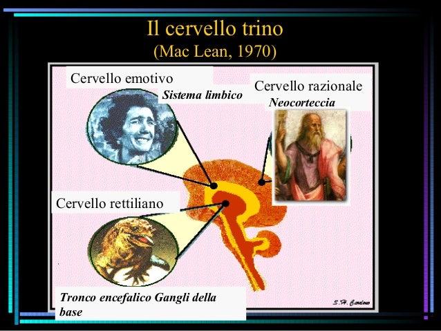 Il cervello trino (Mac Lean, 1970) Sistema limbico Cervello razionale Neocorteccia Cervello emotivo Cervello rettiliano Tr...
