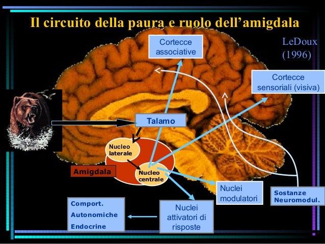 LeDoux (1996) Il circuito della paura e ruolo dell'amigdala Nucleo laterale Nucleo centrale Cortecce sensoriali (visiva) C...