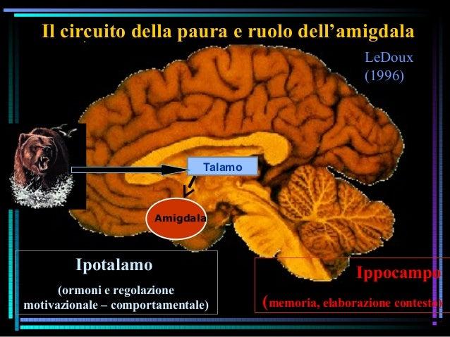 LeDoux (1996) Il circuito della paura e ruolo dell'amigdala Amigdala Talamo Ippocampo (memoria, elaborazione contesto) Ipo...