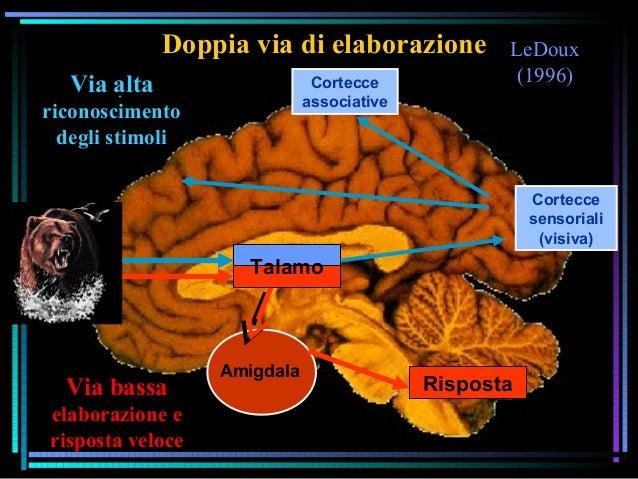 LeDoux (1996) Doppia via di elaborazione Cortecce sensoriali (visiva) Cortecce associative Amigdala Talamo Risposta Via al...