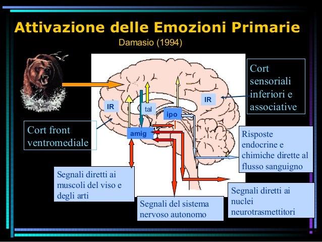Attivazione delle Emozioni Primarie Segnali diretti ai nuclei neurotrasmettitori Segnali diretti ai muscoli del viso e deg...