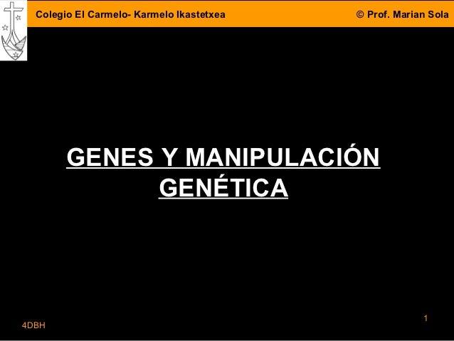 Colegio El Carmelo- Karmelo Ikastetxea   © Prof. Marian Sola        GENES Y MANIPULACIÓN              GENÉTICA            ...