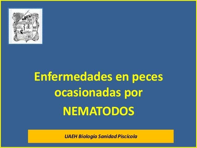 Enfermedades en peces ocasionadas por NEMATODOS UAEH Biología Sanidad Piscícola