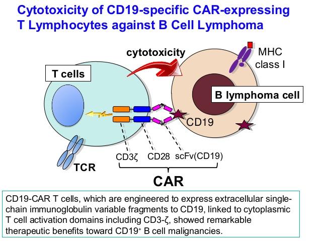 CAR-T cells in Leukemia. Prof. Keiya Ozawa