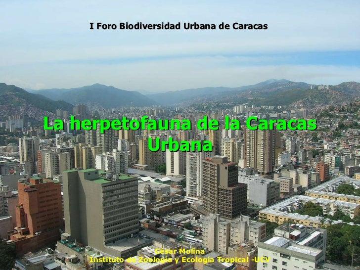 La herpetofauna de la Caracas Urbana César Molina Instituto de Zoología y Ecología Tropical -UCV I Foro Biodiversidad Urba...
