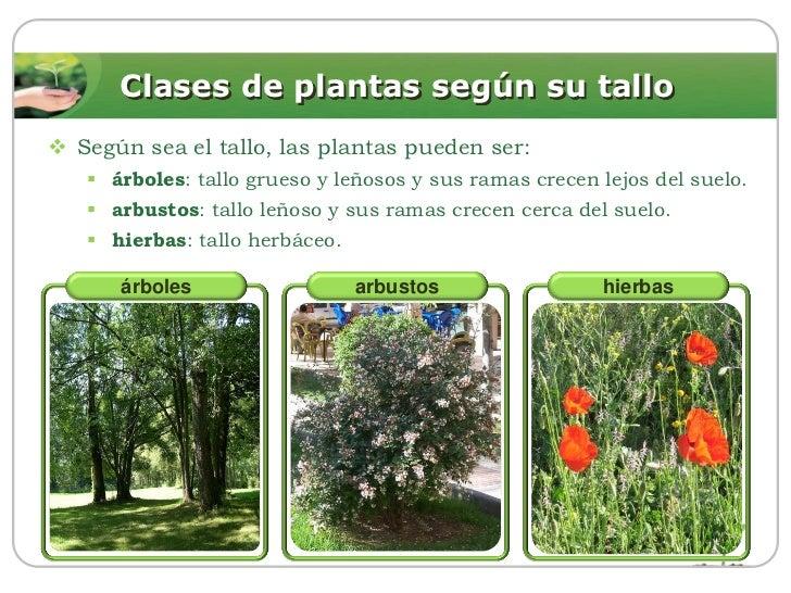 Las plantas for Arboles de hoja perenne para ninos