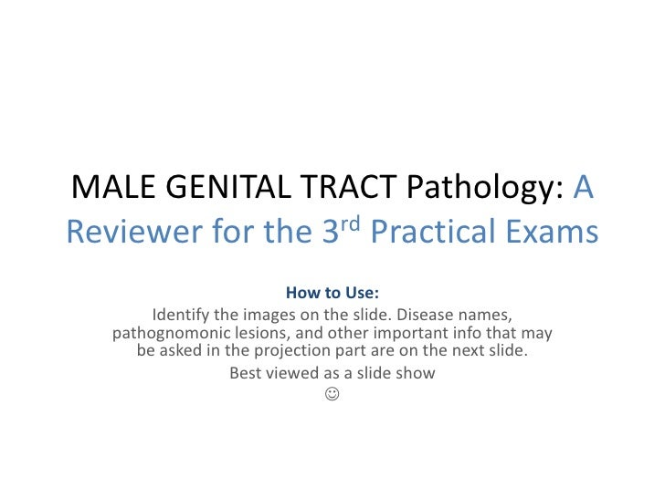 MALE GENITAL TRACT Pathology: A Reviewer for the 3rd Practical Exams<br />How to Use: <br />Identify the images on the sli...