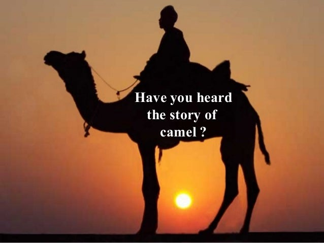 Have you heard  the story of  camel ?