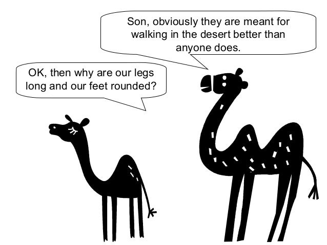 Son, obviously they are meant for  walking in the desert better than  OK, then why are our legs  long and our feet rounded...
