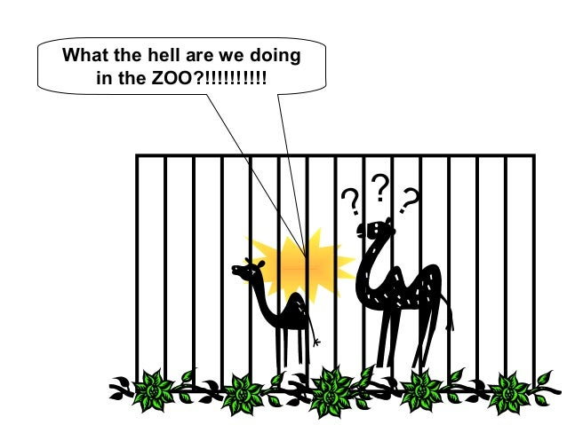 What the hell are we doing  in the ZOO?!!!!!!!!!!  ? ??