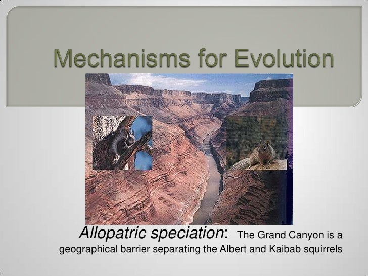 Allopatric speciation:             The Grand Canyon is ageographical barrier separating the Albert and Kaibab squirrels