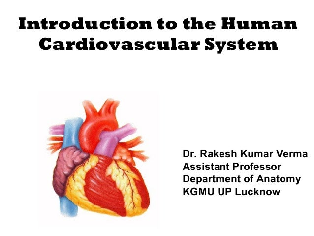 Introduction to the Human Cardiovascular System Dr. Rakesh Kumar Verma Assistant Professor Department of Anatomy KGMU UP L...