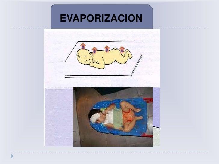 GRASA PARDA<br /><ul><li>Representa el  2 a 6 % de peso corporal total en RN.