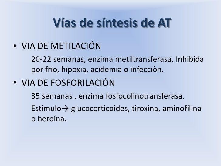 Vías de síntesis de AT<br />VIA DE METILACIÓN<br />20-22 semanas, enzima metiltransferasa. Inhibida por frio, hipoxia, ac...