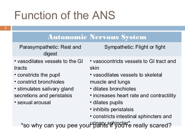 the general effects of massage on the autonomic nervous system In assessing overall health, the role of the nervous system is often overlooked,  but the parasympathetic nervous system is a key component in understanding  and achieving optimal training and wellness  comparatively, some benefits  from spending more time in pns include:  meditation & massage.