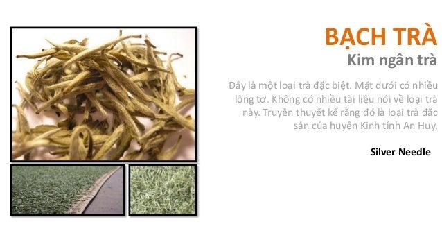 BẠCH TRÀ                           Kim ngân tràĐây là một loại trà đặc biệt. Mặt dưới có nhiều lông tơ. Không có nhiều tài...