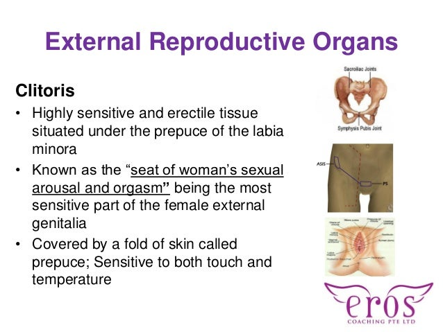 Womens most sexually sensitive parts