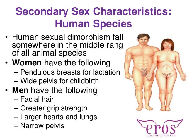 Sexual intercourse between male and female in bed