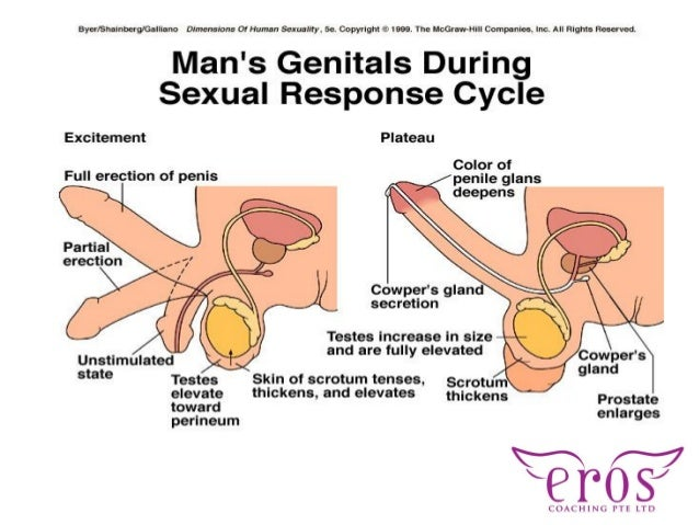 female and male sexuality