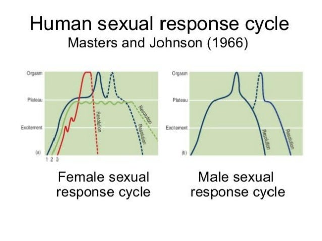 Male sexuality arousal