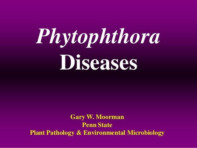 Phytophthora Diseases Gary W. Moorman Penn State Plant Pathology & Environmental Microbiology