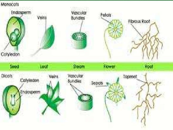 4 Plantsflowers Cones Donohue