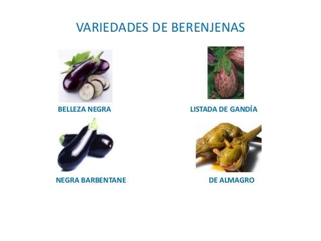 4 producci n vegetal - Variedades de berenjenas ...