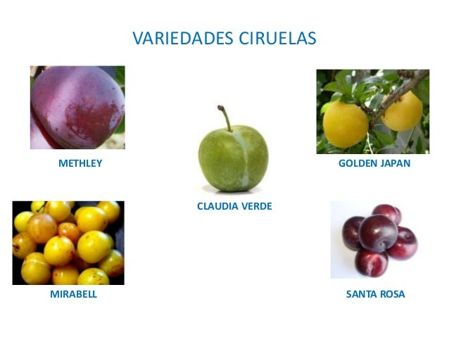 4 producci n vegetal for Ciruela santa rosa