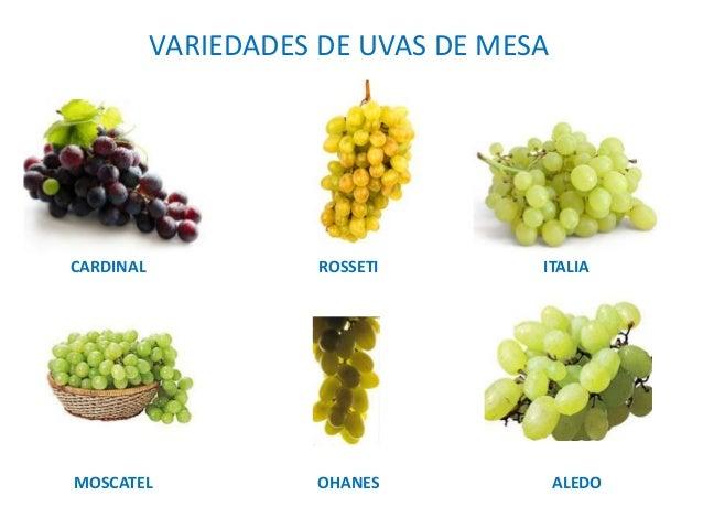 4 producci n vegetal - Variedades de uva de mesa ...
