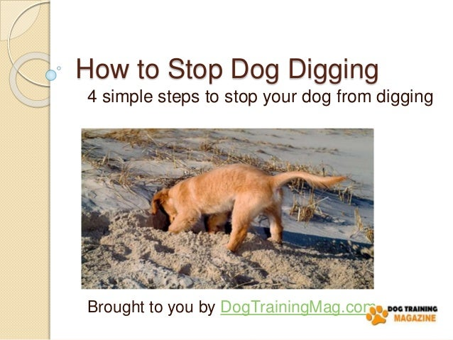 how to stop dogs digging lawn