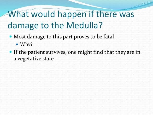 Medulla, Reticular Formation, Thalamus, and Hippocampus