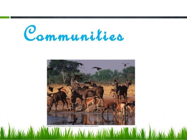 Ap bio ecological succession essay help
