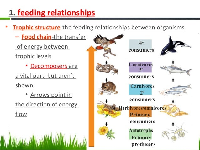 ap biology ecology This is the fifth in a series of screencasts designed to help students master the ecology unit this screencast is devoted to animal behavior the screencasts are.