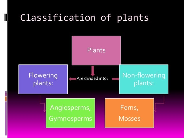Resultado de imagen de classification of plants flowering