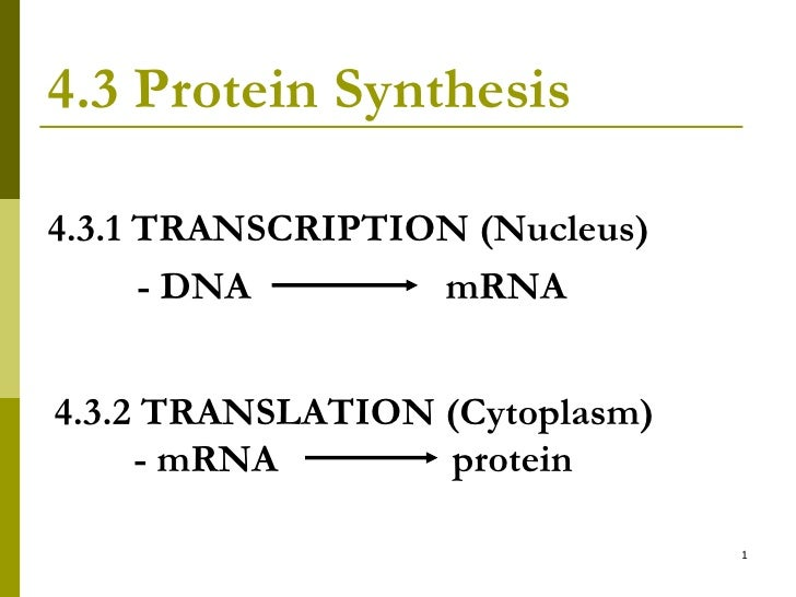 4.3 Protein Synthesis <ul><li>4.3.1 TRANSCRIPTION (Nucleus) </li></ul><ul><li>  - DNA  mRNA </li></ul>4.3.2 TRANSLATION (C...