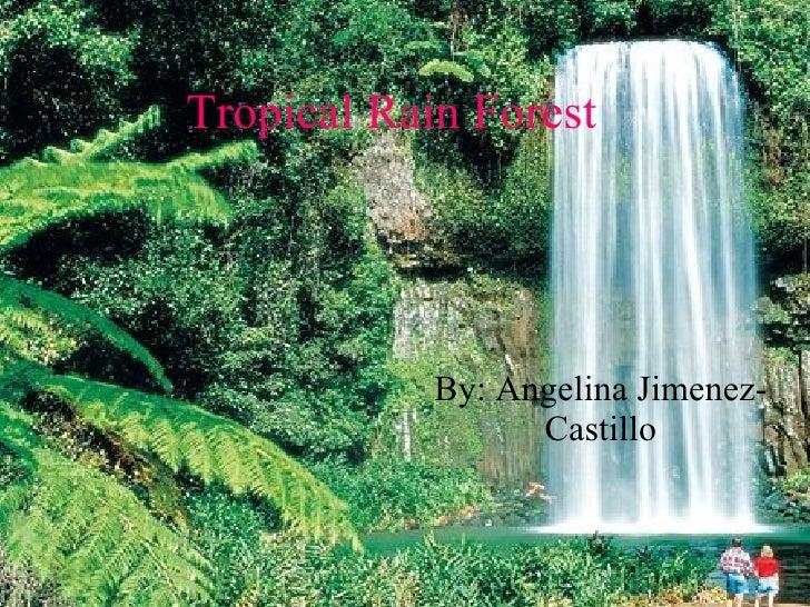 Tropical Rain Forest By: Angelina Jimenez-Castillo