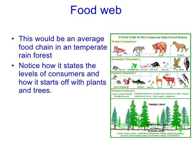 food web ul li this would be an average food