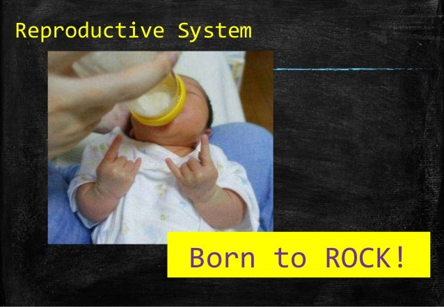 Reproductive System  Born to ROCK!