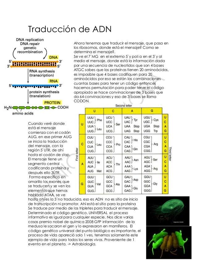 Traducción de ADN Ahora tenemos que traducir el mensaje, que pasa en los ribosomas, donde está el mensaje? Como se determi...
