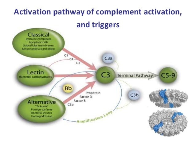 Complement Nature Review