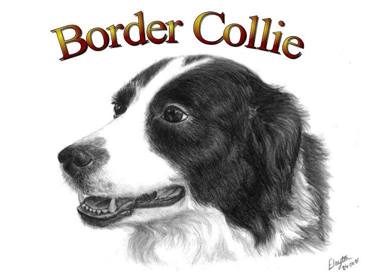 <ul>Border Collie </ul>