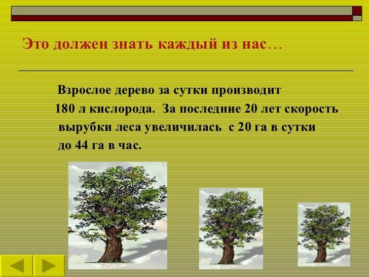 5 Slide 3