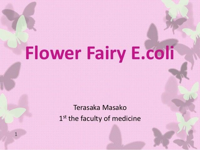 Flower Fairy E.coli              Terasaka Masako        1st the faculty of medicine1
