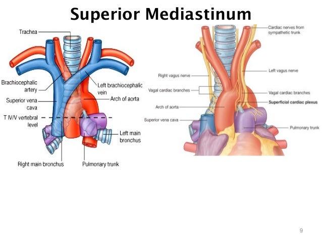 Mediastinum 25993031