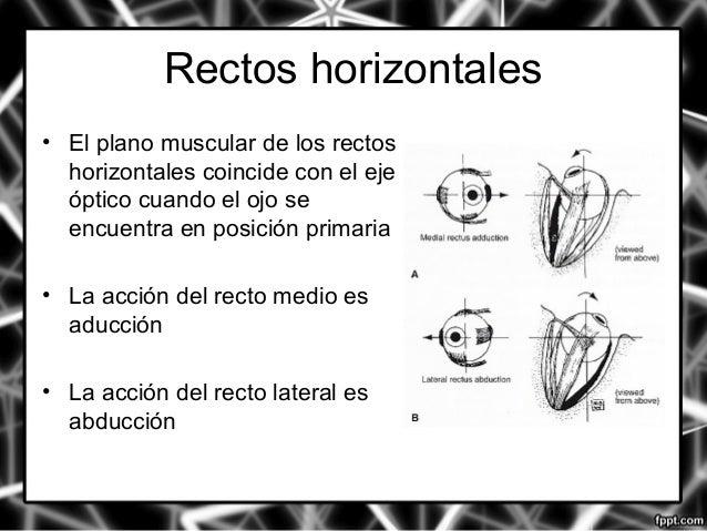 5. anatomia y fisiologia de los músculos extraoculares