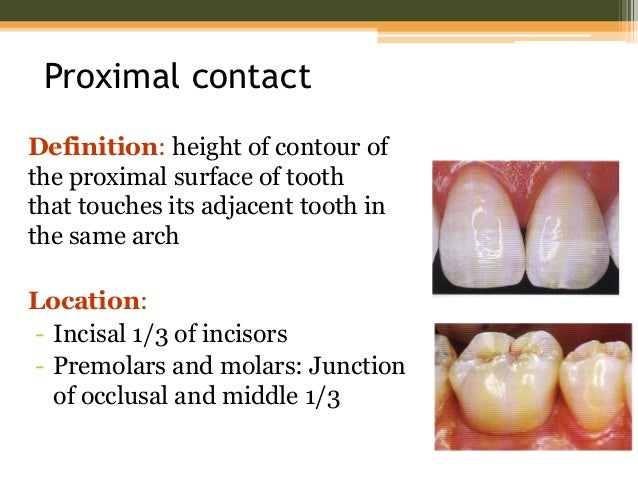 tooth form and occlusion