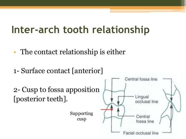 molar interarch relationship