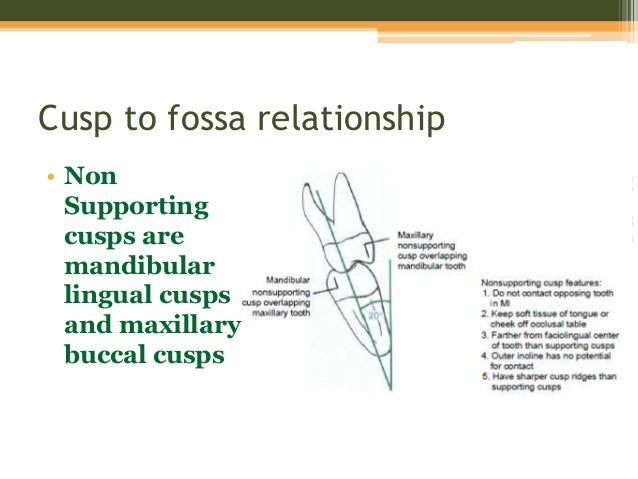 cusp marginal ridge relationship test