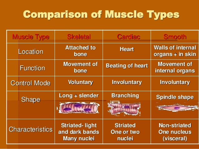 5. muscular physiology